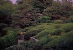 The Botanical Japanese Garden (Jovan Jimenez) Tags: canon elan eos 7ne tilt shift hasselblad planar 80mm f28 kodak portra 800 film urban nature botanical japanese garden tiltshift carlzeiss 30v 33v 7s selectivefocus