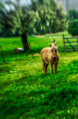 Donkey (Manuela Durson) Tags: lensbaby sol 45 artistic blur blurred selectivefocus animals donkey texture textured