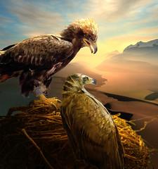 Desert Seductions (jaci XIII) Tags: deserto pássaro ave águia ninho desert bird eagle nest