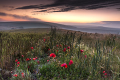 As the light fades (Through Bri`s Lens) Tags: sussex sussexdowns lancingring poppies wildflowers crops farm sunset evening brianspicer canon5dmk3 canon1635f4 leefilters
