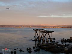 Monterey, CA (DreyerPictures (10 million views - Thank You!)) Tags: gh5 lumix m43 m43ftw microfourthirds mirrorless nature outdoor panasonic beach dark dreyerpicturescom dusk landscape night slowshutter sunset monterey california us