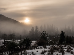 Winters Morning - Benmore Jan 2018 (GOR44Photographic@Gmail.com) Tags: benmore botanicgardens argyll scotland cowal winter trees sunlight mist hills loch eck loop snow mountains gor44 panasonic gx8 olympus 1240mmf28