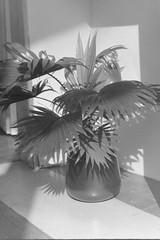 * (laetitia.delbreil) Tags: monochrome monocromo biancoenero bn nb bw blackandwhite blancoynegro film fimphotography argentique analogico análogo analogue slr reflex singlelensreflex pentacon prakticab200 prakticar50mm118 rolleirpx400 iso400 fixedfocallength ishootfilm filmisback filmisawesome filmisnotdead jesuisargentique analogsoul westillcare 35mm vintagecamera believeinfilm
