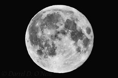 Why Do We Keep Photographing the Moon? (LongInt57) Tags: moon full sky night craters astronomy bw monochrome black white grey gray kelowna bc canada okanagan