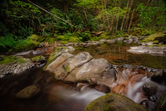 Just One Yesterday (Carrie Cole Photography) Tags: albernivalley bc britishcolumbia canada carriecole carriecolephotography fossli le portalberni standrewscreek vancouverisland westcoast brook creek forest green landscape longexposure nature outdoors scenic tourism travel water