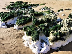 P1030189 (R C Pearce) Tags: broadstairs 2016 chalk beach sand seashore seaweed rocks