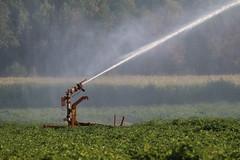 Glad I am,  !!  Artificial spraying still allowed. (excellentzebu1050) Tags: farm field artificial spraying crops summer2018 drought dryfields fieldwork farmer coth5 sunrays5