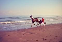 Freedom (ahegphotography) Tags: beach horse cart ireland sea nature colour