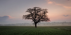 Out Of Shape (hammermad) Tags: tree mist morning sunrise crops fields