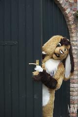 _DSC0031 (MM Furry Photo) Tags: bunny rabbit fursuit fursuiting portrait critterfactory pantoffel