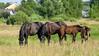 DSC_0952 (dmilokt) Tags: лошадь конь horse деревня village природа nature dmilokt