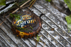 'Corona' (Alexander Jones - Documentary Photography) Tags: documentary photography lido di jesolo nikon d5200 venezia north east italy veneto venice beach sea macro