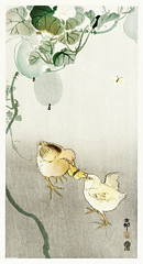 Two chicks fighting for a butterfly (1900 - 1910) by Ohara Koson (1877-1945). Original from the Rijks Museum. Digitally enhanced by rawpixel. (Free Public Domain Illustrations by rawpixel) Tags: chim eye animal pdoriginal antique pdproject21batch2 art pdrijks asian publicdomain bird chicks drawing illustration japan japanese koson name ohara oharakoson old paint vintage