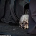 Venus Williams Dog