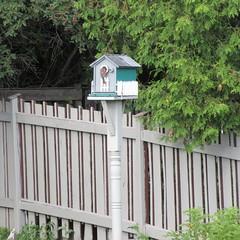 ** Pris sur le fait ** (Impatience_1) Tags: oiseau bird nichoir cabanedoiseaux birdhouse clôture fence m impatience supershot coth coth5 sunrays5