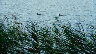 At the Balžis Lake 46
