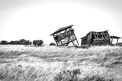Amador County, California (paccode) Tags: solemn shack landscape blackwhite quiet california abandoned barn tree wreck creepy d850 forgotten scary monochrome farm serious field plymouth unitedstates us