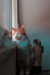 Boby Orange&Teal (fcojavier1991) Tags: nikon nikond3300 nikkor50mm orangeteal pet pets animals animales mascotas cat cats dog nice beautiful beauty adorable