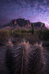 Dutchman's Flail (Darkness of Light) Tags: arizona sedona lostdutchman statepark irontop spikes spires bluehour sunset tempe cactus hedgehog cholla