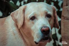 Rocky Boy! (Amalan Stallone Photography) Tags: pet friend kid buddy love darling