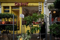 Fig tree. (jcof) Tags: london londres figtree higuera higos mujer woman columbia road flower market columbiaroadflowermarket inglaterra