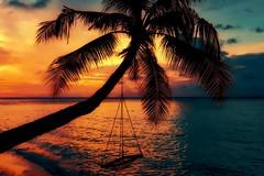 Paradise found! (Trayc99) Tags: paradise sunrise beach sea ocean tree palmtree vacation sky sunset water