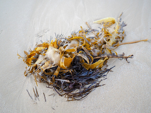 """Seaweed • <a style=""""font-size:0.8em;"""" href=""""http://www.flickr.com/photos/160671654@N04/42991577094/"""" target=""""_blank"""">View on Flickr</a>"""