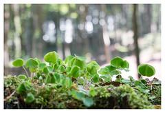 Down on the forest floor (leo.roos) Tags: mønsklint forest wood bos møn denmark denemarken sonycarlzeissvariotessarfe1635mmf4zaoss variotessar16354 sel1635z variotessartfe41635 sonycz16354 swedenspring2018 a7rii darosa leoroos