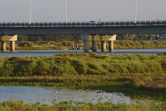 Salt marshes of Samouco  #tagus #tejo #nature #portugal #t3mujinpack (t3mujin) Tags: transportation places salt architecture location ribatejo yellow color river water alcochete lagoon samouco tagus portugal road tejo bridge europe lake