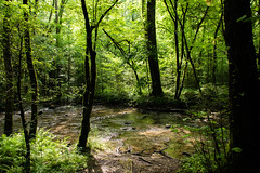 Forest stream (Sallin) Tags: greatsmokymountainsnationalpark plant kleuren familie landschap groen zuiden boom noordamerika tennessee vs licht bos beekje vakantie northamerica south tn us unitedstates verenigdestaten beek bomen colors forest green holiday landscape light stream tree trees wood woud