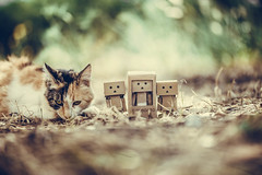 New Danbo friend arrived today :) (Vagelis Pikoulas) Tags: danbo toy canon cat 6d sigma art f14 85mm