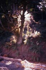 Tacoma, Wa 9/2017 (kylemorrisseyphoto) Tags: nikonl35 nikonl35af nikon pointandshoot 35mm fujifilm fuji fujisensiaii100 fujichrome tacoma wa 2017