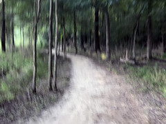 """johnson park trail blur (""""One who sits by the fire"""") Tags: trailblur forest foresttrail trailthroughtheforest johnsonpark tennessee trees blur blurphotography intentionalblur intentionalcameramovement icm"""