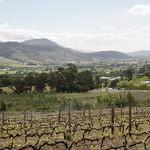 Weinberge in den Winelands, Südafrika