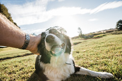 Who's A Good Boy? (Robert Lang Photography) Tags: whosagoodboy animal arm canine collie dog family frontyard grass hand home love old outdoors pet pattingapetbordercolliesheepdogontheheadsittingongrass pattingapetbordercolliesheepdog copyspace negativespace sheepdog bordercollie fluffy horizontal colour color pat patting touch feel brush