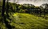 18-04-19 pan licht gras zaun flu dsc09418-1 (u ki11 ulrich kracke) Tags: flucht nah panorama salingen sh sonnenaufgang struktur tröp zaun
