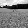 Spuren im Feld / Tracks in the field (Lichtabfall) Tags: tracks spuren field feld landscape blackwhite blackandwhite landschaft monochrome schwarzweiss nenndorf einfarbig sw bw