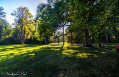 In the meadow (kud4ipad) Tags: 2015 garden landscape park tree grass green sky sun light shadow botanic foliage orton hdr