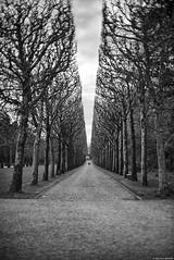 La cathédrale végétale (Mathieu HENON) Tags: leica leicam 50mm noctilux m240 noirblanc blackwhite nb bnw france hautsdeseine sceaux parc allée couple streetphoto photoderue