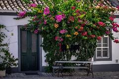 Flower rain (desmokurt1) Tags: lissabon lisbon lagos faro portugal algarve sw bw color kurtessler atlantik tejo vascodegamma downtown village water blüten baum blumen