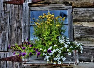 Colorful Windowbox