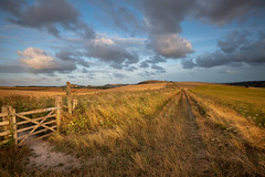 Downland Gold (Richard Paterson) Tags: south downs national park sundown dry fields golden gate path country bucolic west sussex