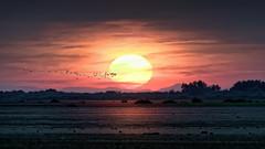 Sunset in the Camargue (loic.pettiti) Tags: programmanual lens150600mmf563gvr f130 speed1640 iso3200 focallength550mm affinetuneadj0 focusmodeafc afareadynamicarea3dtracking shootingmodesingleframe 3 autoiso 9 vron ev53 meteringmodemultisegment wbauto0 picturecontrolneutral focusdistance26607m dof20675m1981440489 hyperfocal77445m