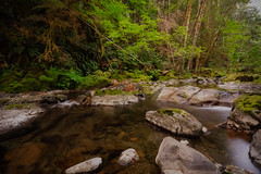 Once (Carrie Cole Photography) Tags: albernivalley bc britishcolumbia canada carriecole carriecolephotography fossli le portalberni standrewscreek vancouverisland westcoast brook creek forest green landscape longexposure nature outdoors scenic tourism travel water