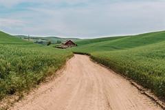 Road To Ruin (Pedalhead'71) Tags: abandoned barn desert dirtroad drive easternwashington gravel landscape palouse prairie road rural washington whitmancounty wheat