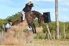 Pablo Silva (Eduardo Amorim) Tags: gaúcho gaúchos gaucho gauchos cavalos caballos horses chevaux cavalli pferde caballo horse cheval cavallo pferd crioulo criollo crioulos criollos cavalocrioulo cavaloscrioulos caballocriollo caballoscriollos pampa campanha fronteira bagé riograndedosul brésil brasil sudamérica südamerika suramérica américadosul southamerica amériquedusud americameridionale américadelsur americadelsud cavalo 馬 حصان 马 лошадь ঘোড়া 말 סוס ม้า häst hest hevonen άλογο brazil eduardoamorim gineteada jineteada