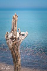 Whitefish Point Driftwood Art (amndcook) Tags: shoreline pattern landscape season nature water upperpeninsula gitchigumee michigan blue outside summer naturephotograph amandacook outdoors agate rocks spiritledphotography lakesuperior driftwood