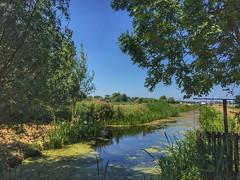 Summer green (sander_sloots) Tags: green trees water canal rotterdam sloot bomen groen landscape landschap
