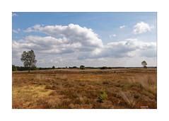 VELUWE - Trockenperiode (Babaou) Tags: niederlande nederland gelderland veluwe naturgebiet heide putten2018