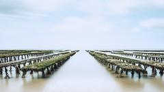 Oyster farming... (The Black Fury) Tags: seascape longexposure poselongue highkey nature clouds sea beach water path sky